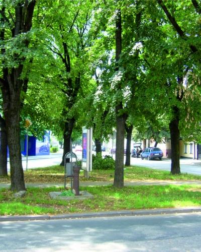 Sú stromy majetkom občanov mesta?